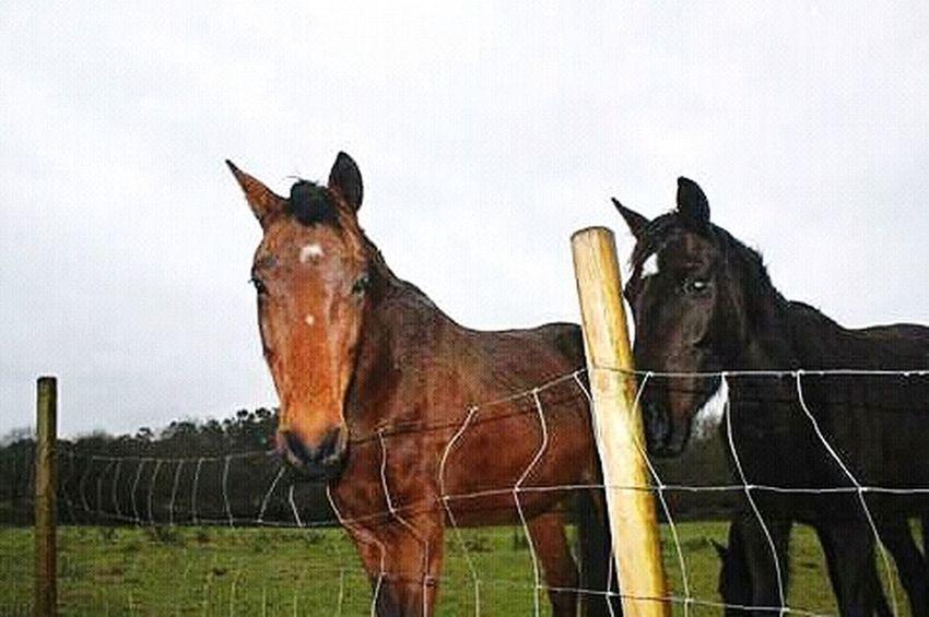Horses 🐎🐎 Horse Animal Themes Day Ecovia Portugal Natureza🍁 Animals In The Wild Animalsposing