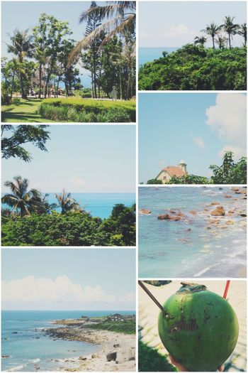 沙滩海水椰树🌴渴了就来个椰青.🌝 Tree Sea Sky Beach Beauty In Nature Collage Traveling Travel Photography 2017 Eyeem Awards Taiwan 台灣 Palm Tree Green Color Vacations A Better Life Share My World:) Taking Photos Enjoying Life Records City View  Lifestyles Slowlife Sunshine Summer