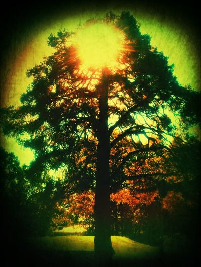 Spirit Of The Tree How Are You!? The Guiding Light For My Friend