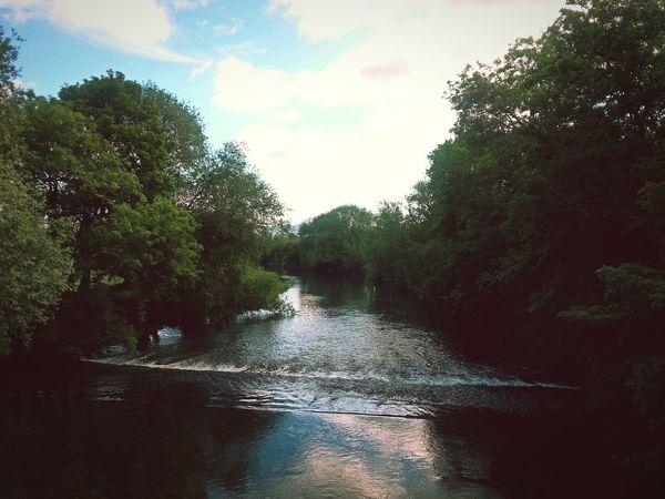 River Hafren near Welshpool ... River Severn Wales Summer Water Trees Beautiful Nature река