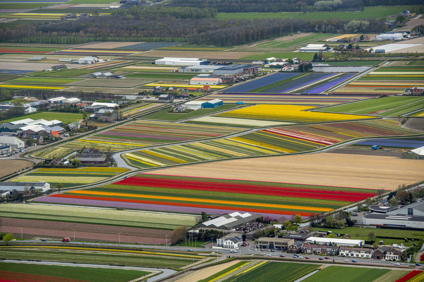 Flowering bulb fields in the bulb region at Lisse in the Netherlands Flowering The Netherlands Aerial Aerial Photography Dutch Landscape Holland Lisse  Tulip Tulips Flowers