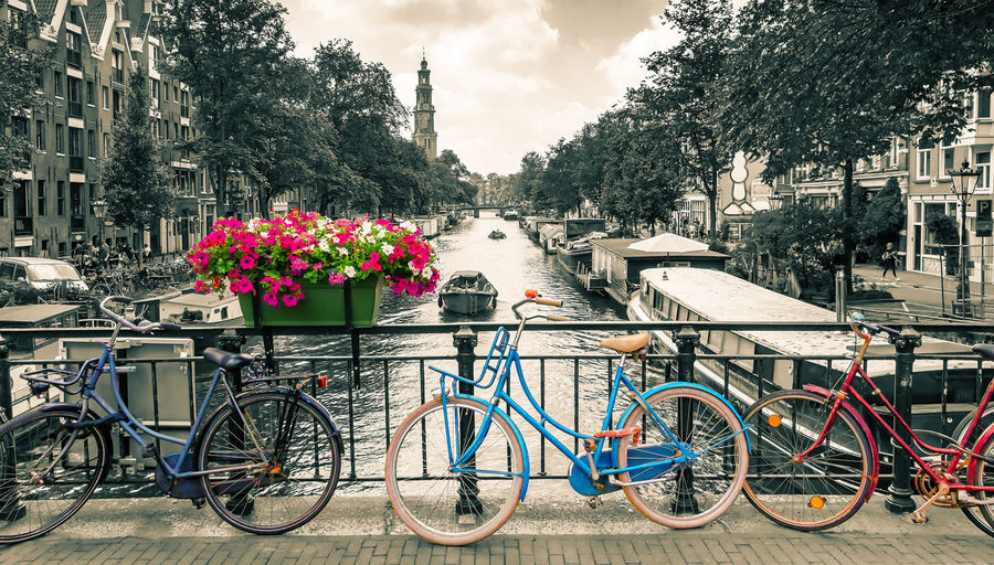 Amsterdam - Photo in black and white with colored bicyles Amsterdam Netherlands Dutch Gracht Canal Art Artistic Bicycle City Flower Nature Water Architecture Cheerful Colorful Black And White Destination Vacations Vintage Poster Wallpaper Europe Boat Bike Fun