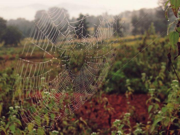 Dew on spider web Dewonspiderweb Spider Web Nature