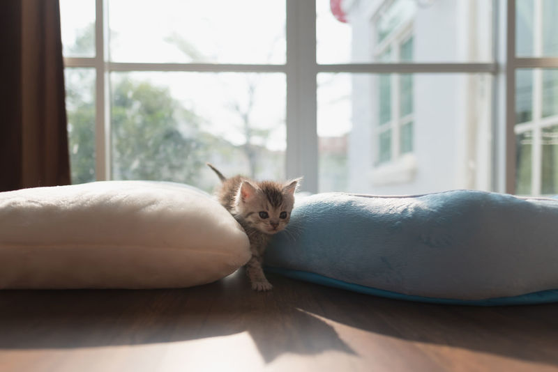 Cute lazy kitten on bed in the morning. Home Morning Animal Themes Cat Close-up Day Domestic Cat Indoors  Kitten Lazy Lying Down Mammal Naughty Cat No People Pets Play Sleep