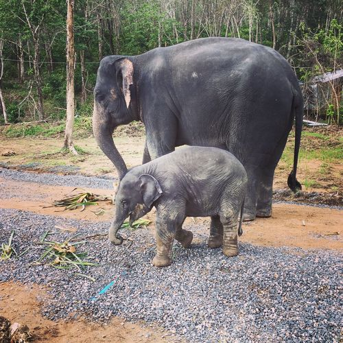 Animal Wildlife Wonderful Nature Elephant Babyelephant Elephantsanctuary Loveasia