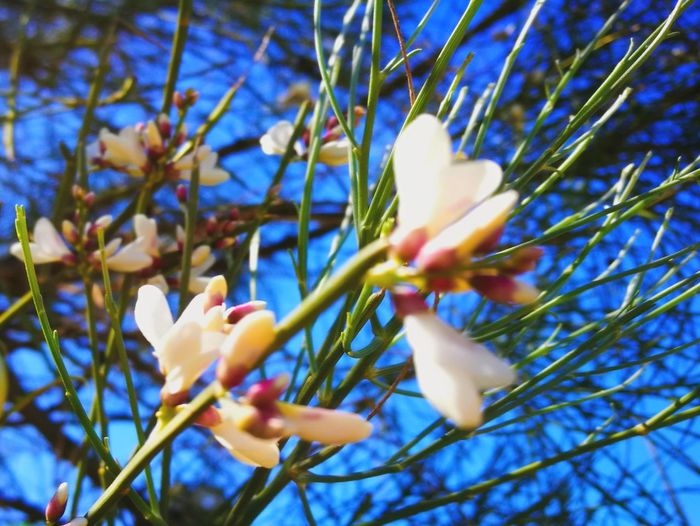 Flower Growth Beauty In Nature Fragility Nature Springtime Blossom