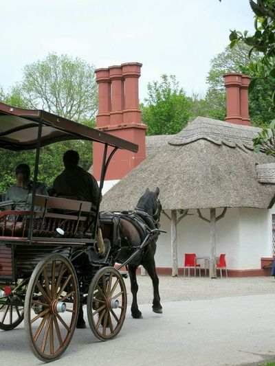 Horse &. carriage Horse Carriage Tourists Tourist Attraction  Thatched Cottage Thatched Roof Thatch Thatched Chimneys 19th Century Killarney  County Kerry Ireland