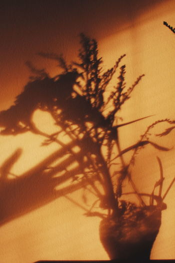Plants Shadows Shadows & Lights Shadow Sunset Close-up Plant Sky Blooming Plant Life Petal In Bloom Fragility