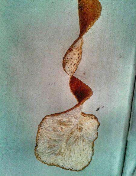 🍊 Cover Close-up No People Indoors  Nature Freshness Day Fruits Cubierta Cascaras De Citricos Cascara Cáscara De Naranja Naranja EyeEm EyeEm Best Shots Amazing Dry Good Details Exterior Detalles Fotografia EyeEmBestPics
