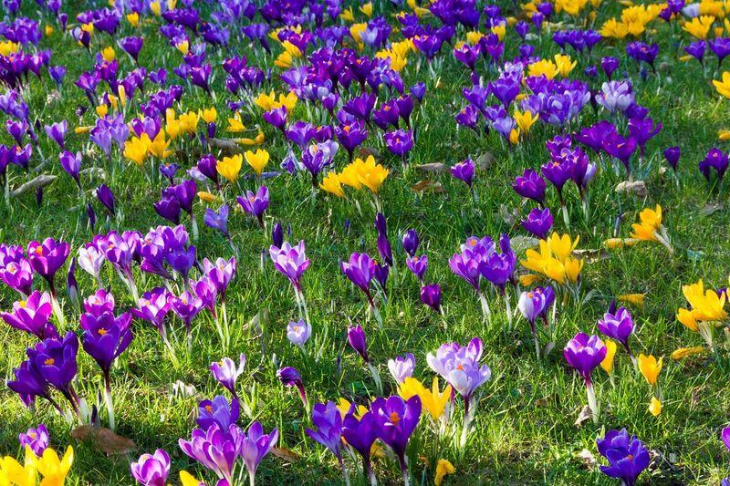 Spring in Neuss