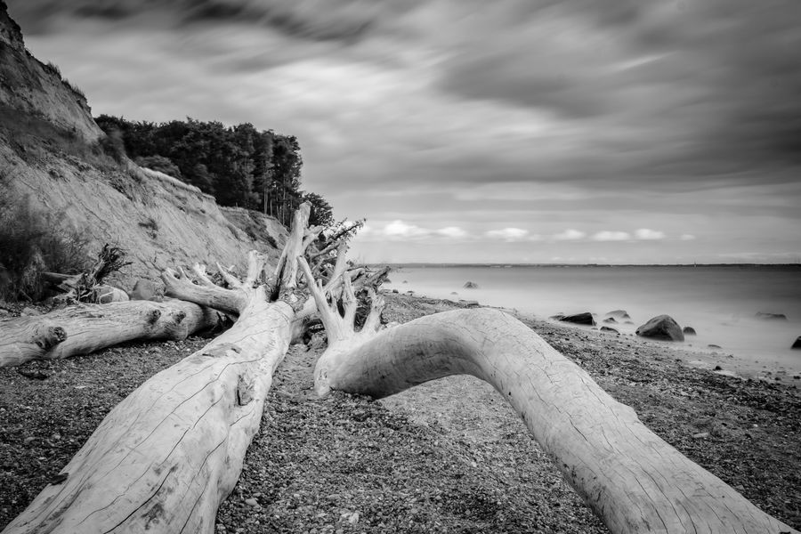 Driftwood at the Baltic Sea. Baltic Sea Beach Beauty In Nature Blackandwhite Cloud - Sky Day Driftwood Horizon Horizon Over Water Idyllic Land Log Nature No People Non-urban Scene Outdoors Scenics - Nature Sea Sky Tranquil Scene Tranquility Water Wood Wood - Material