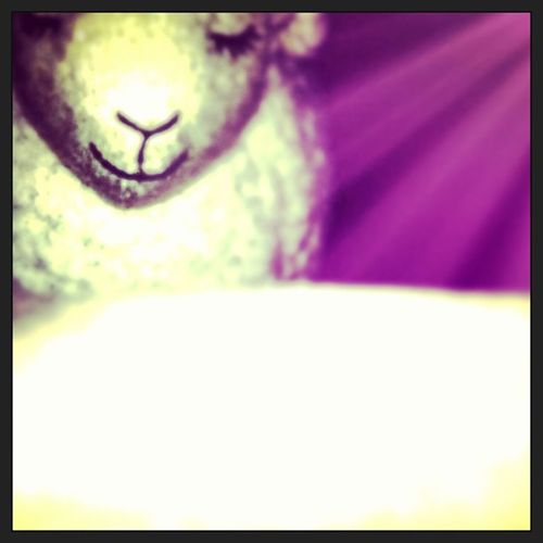 This picture of Lambie went through 3 apps for filters and edits. Lol! Bathandbodyworks Filters Iphoneapps lensflare photocat