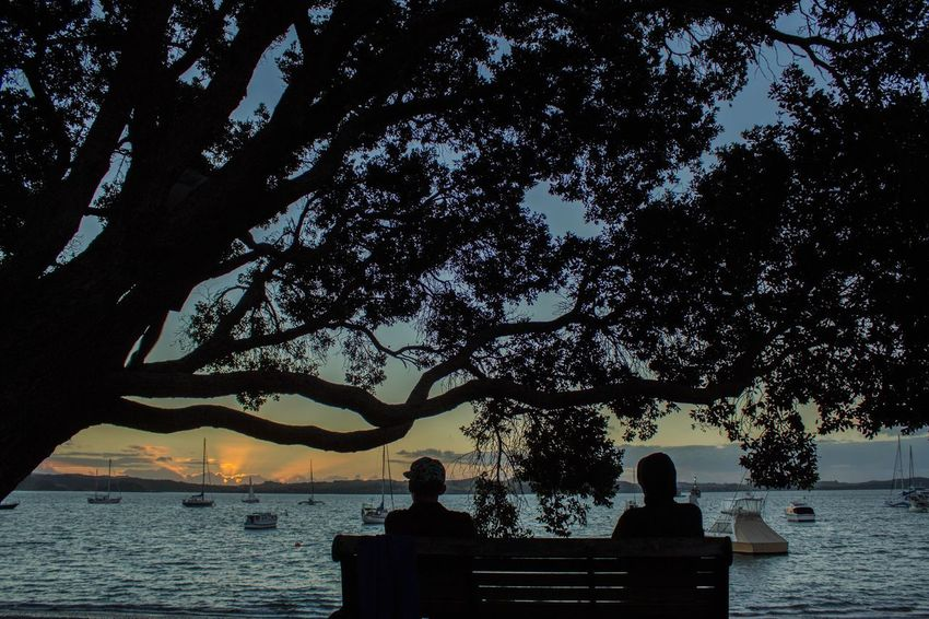 Looking at sunset Sea Traveller Travel Travel Destinations New Zealand Tree Silhouette Nature Beauty In Nature Water Two People Scenics Tranquility Sitting Outdoors Sky Men Women Branch Day People The Great Outdoors - 2018 EyeEm Awards