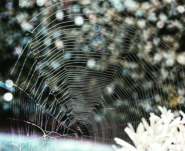 Spider Web No People Nature Outdoors Fragility Close-up Beauty In Nature Concentric Day