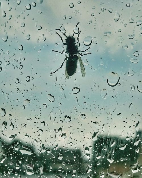 Let me in!!!! Eeeeek....not on your Nelly! 😜 Rain Glass - Material Insect Window Wet Close-up Water Raindrops Rain Wasp Transparent Insect Photography Legs Help Frightened  Sting Nature Droplets Keep Out Insects  Insect Paparazzi Waterdrops Rainy Days Glass Let Me In