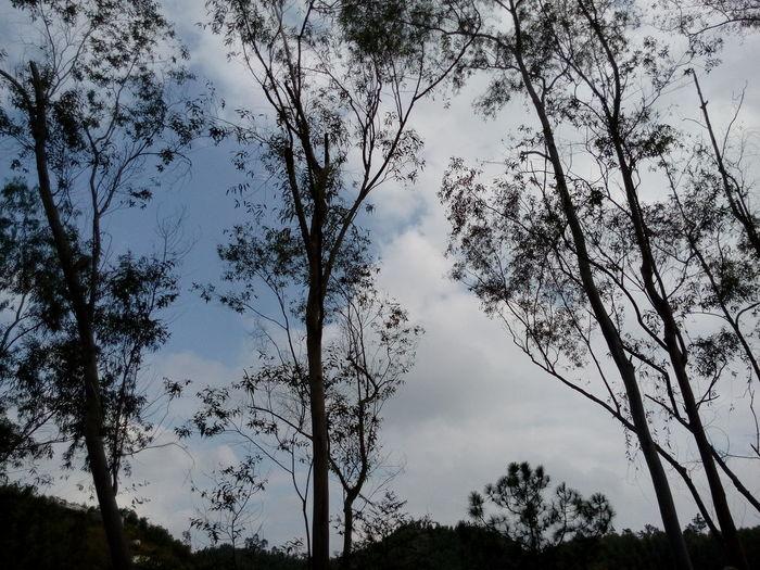 Tree Nature Sky