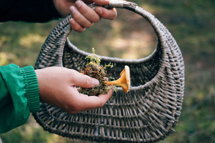 picking mushrooms in the forest Mushroom Mushrooms Mushrooms 🍄🍄 Mushroom_pictures Forest Human Body Part Human Hand Forest Fall Autumn Human Hand Close-up Autumn Mood