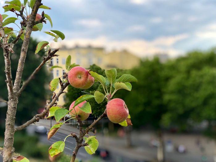 best apples in
