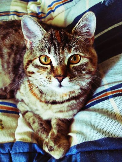 Cat Cat Lovers Cat Mary Catsofinstagram Cat Eyes Cat Watching Cat Follow Cats Of EyeEm Photography Enjoying Life