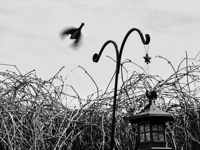 Bird Birdwatching Bird In Flight Bird In Motion Wings Flight Blackandwhite Bird Feeder