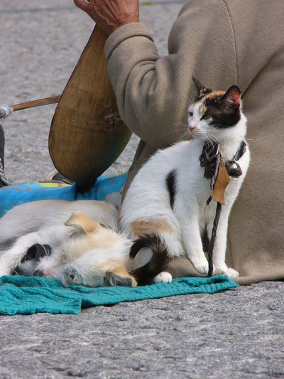 High angle view of pets with street musician