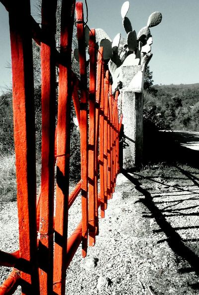 Red Gate Black And White Photography Gate Gates Gates And Fences Shadows & Lights Sunny Day Portugal Day Outdoors No People Sunlight Built Structure Architecture Close-up