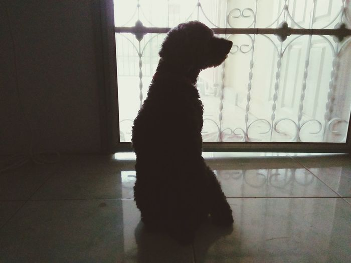 Rear view of dog by window