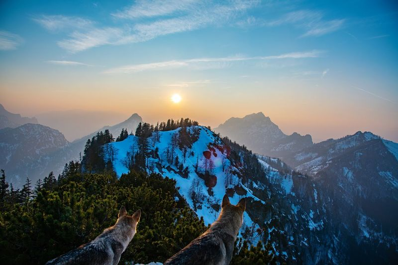Wolf in the mountain Holiday Tourism View Hiking Destination Chilling Travel Copy Space Wolfzuachiv Wolf Mountain Sky Scenics - Nature Beauty In Nature Mountain Range Sunset Tranquility Cloud - Sky Tree Landscape Nature Environment Tranquil Scene Mountain Peak Pine Tree Plant Coniferous Tree Pinaceae Non-urban Scene Pine Woodland