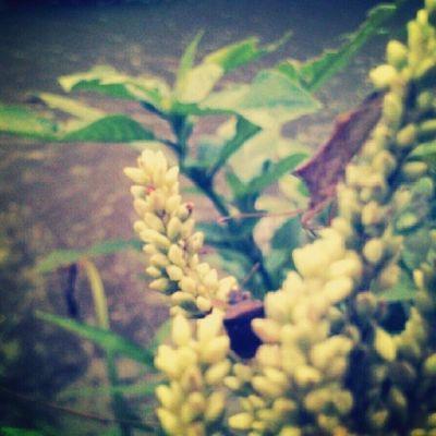 Perayu dan penggoda Bumblebee Insect Grass Stone Nature InggridFX SExperia Photo Instagram Likeforlike Amateur