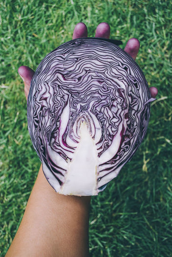 Holding holding purple cabbage Holding Hands Beauty In Nature Cabbage Child Close-up Day Food Foodphotography Freshness Grass High Angle View Holding Human Body Part Human Hand Lifestyles Low Section Nature One Person Outdoors People Purple Purple Food Real People Vegetable Vegetables