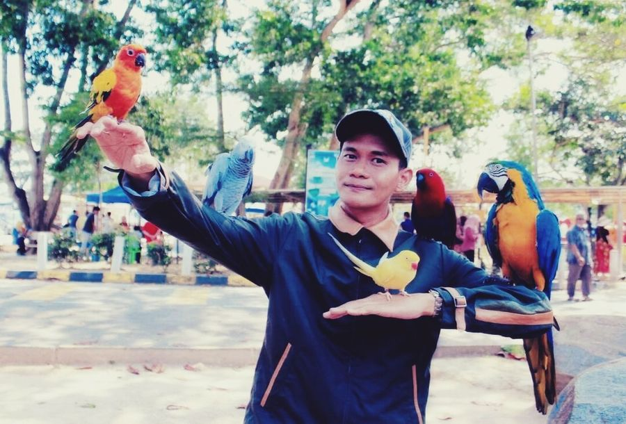 Burung Kakak Tua Waist Up People Smiling Happiness Adult Day Only Men Outdoors One Man Only