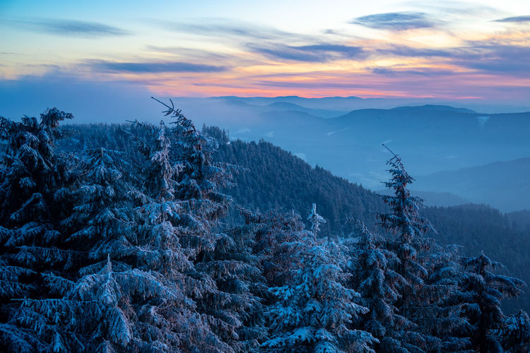 Scenic view of pine trees against sky during sunset