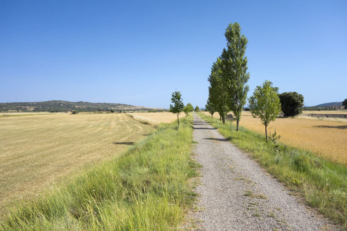 Agriculture Barracas Beauty In Nature Blue Castellón Clear Sky Day Field Grass Green Color Growth Landscape Nature No People Outdoors Road Rural Scene Scenics Sky The Way Forward Tranquil Scene Tranquility Tree València