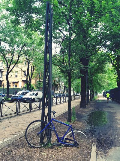 Onceuponatime Spring Trees Broken Broken Beauty Bike Lone Alone In The City  Forgotten Missed Leftbehind cityscapes Tree Bicycle Rack Park - Man Made Space Outdoor Play Equipment #FREIHEITBERLIN