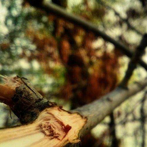 Focus HDR Autumn Romania Bogdan2309