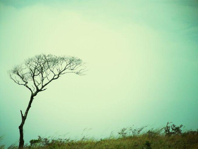 Hugging A Tree Landscape_photography Landscape #Nature #photography