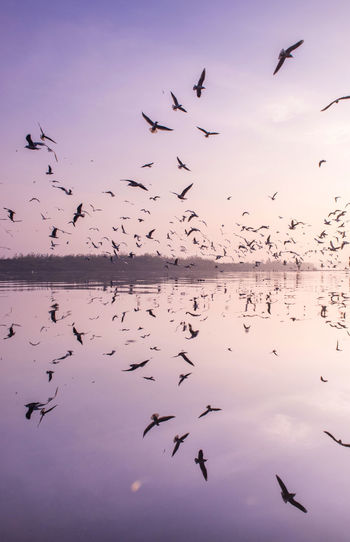 Flock of birds flying over lake against sky during sunset