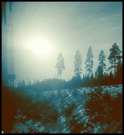 Love shyness and tenderness of winter sun Winter Sun Winter Sunshine Winter Nature