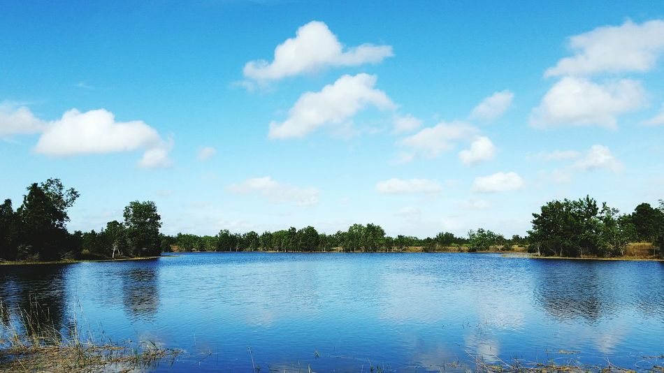 A little lake. Lakesideview Peaceful Blue Sky White Clouds Florida