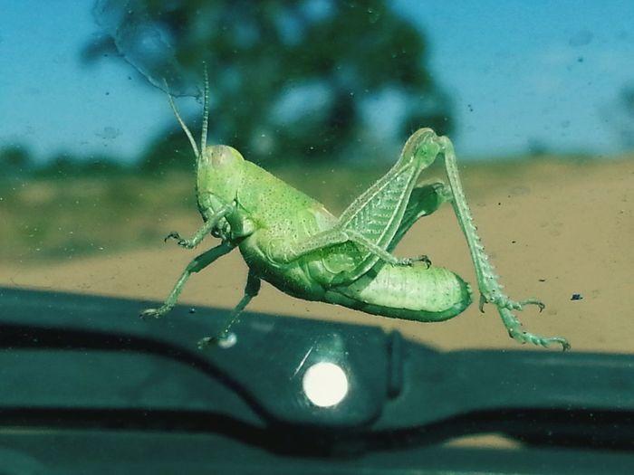 MeinAutomoment Grasshopper Windshield Shots Dirt Road Aneye4theshot Colorado Nature Photography Wildlife