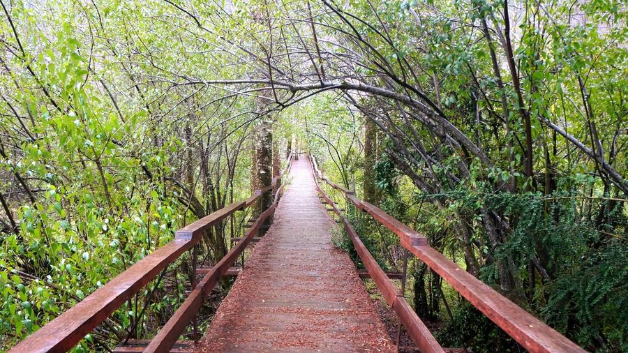 Voy por buen camino Relaxing Taking Photos Enjoying Life Nature Hugging A Tree Wood