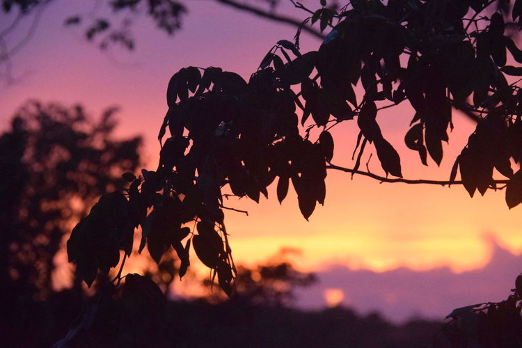 Sunset in Mancalona Mexico Beauty In Nature Calakmul Biosphere Reserve Focus On Foreground Jungle Leaf Nature Outdoors Plant Rainforest Selective Focus Silhouette Sky Sunset Tree Wilderness Yucatan Peninsula