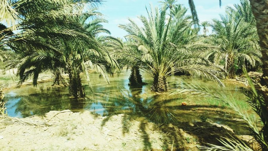 Morocco MarocTree Nature Reflection Water No People Growth Outdoors Plant Leaf Day Sky Beauty In Nature Close-up Beauty In Nature Desert Climate Change(global Warming) Global Warming Climate Change Climatechangeisreal Climate Nature Photography