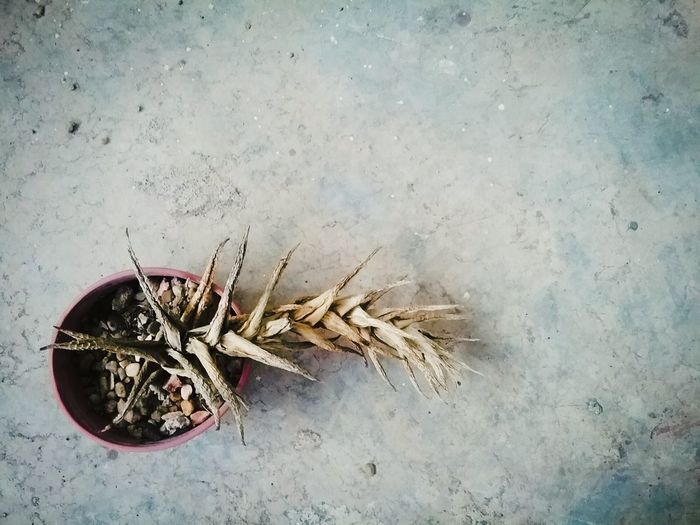 Plant Life Dead