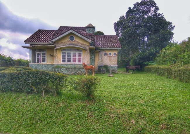 House On The Hill in the Morning . House Home Sweet Home Horse Landscape Nature Outdoors No People Ciater Kecamatan Ciater Naturelovers