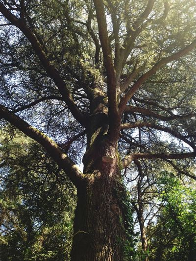 Nature On Your Doorstep Beautiful Trees Giant Nature Green France Holiday