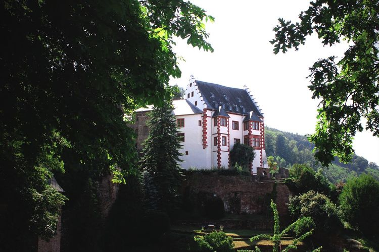 Tree Architecture Built Structure Building Exterior No People House Day Outdoors Nature Growth Plant Low Angle View Branch Beauty In Nature Sky Mildenburg Miltenberg Burg Castle Old