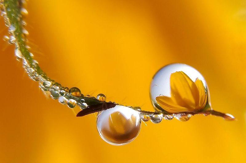 Dew & flower Macro Photography Macro Nature Dew Drops Dewdrops On Flowers