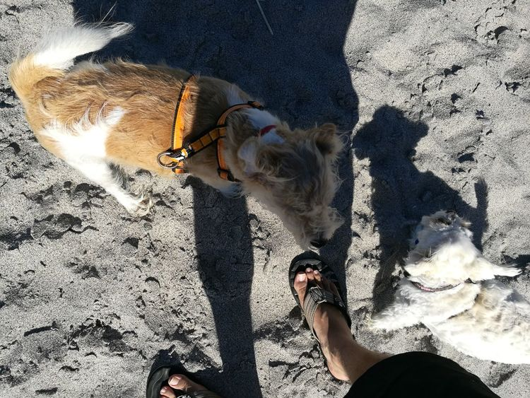 Afternoon at the beach. Sunlight High Angle View Domestic Animals Low Section Shadow Leisure Activity Outdoors Beach Lifestyles Day Human Leg Togetherness Sand Human Body Part Pets Men Dog Shadows & Lights Animallovers EyeEmNewHere NoEditNoFilter