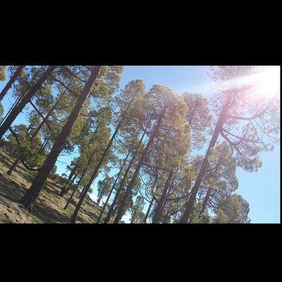Dia De Candelaria Pinos Canarios Monte 📷